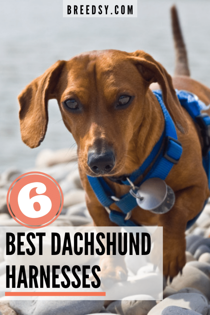 Picks for the Best Overall Harness for Dachshunds