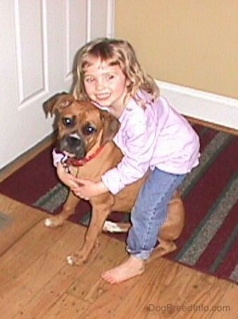 A smiling little girl with her arms around a brown Boxer. They are looking up, the Boxer is sitting on a rug and they are in front of a white door.