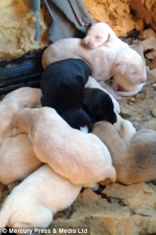 All Vera has to worry about now is feeding her puppies and sleeeping