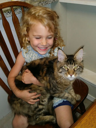 EuroCoons Maine Coon lap cats