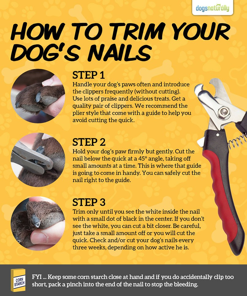 3 steps on how to trim dogs nails