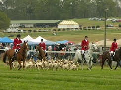 American Foxhounds at the Atlanta Steeplechase