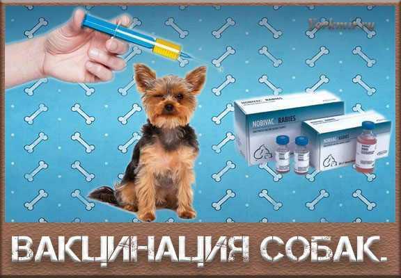 отечественные прививки для собак